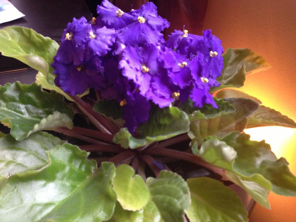 Resultado de imagen de flores pinterest