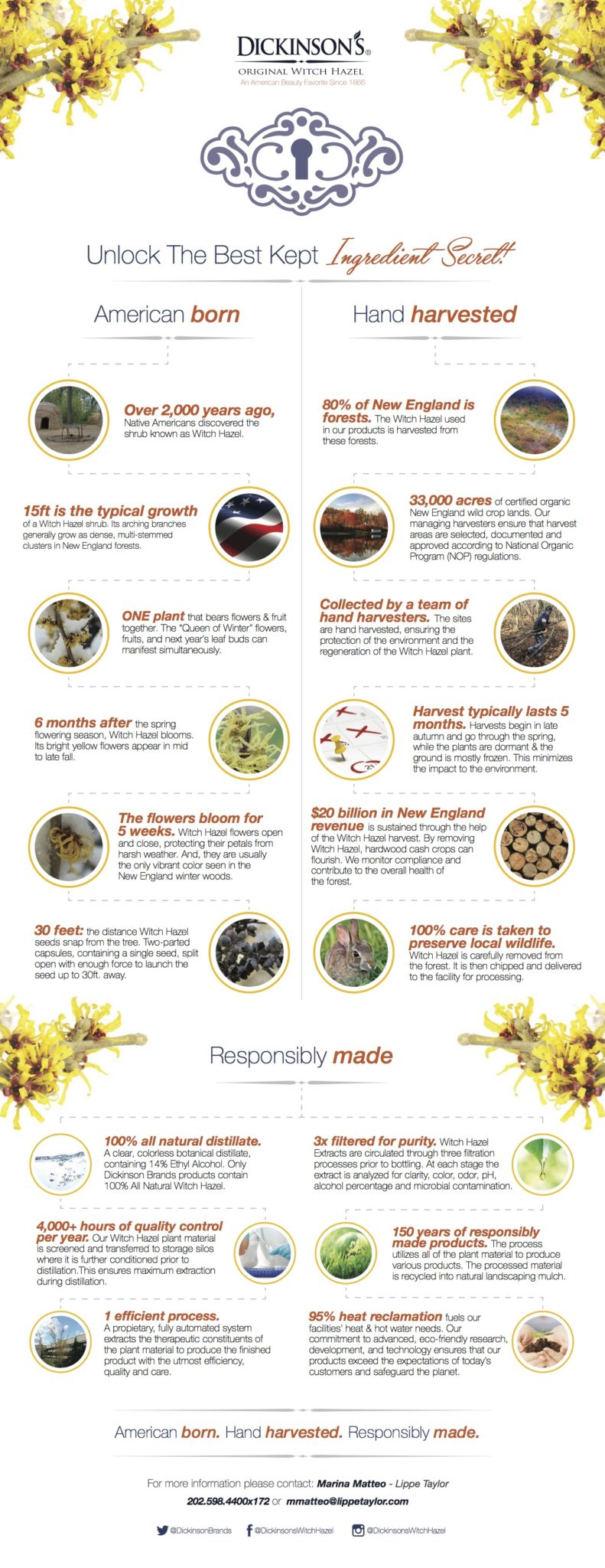 Benefits-of-Witch-Hazel-Infographic
