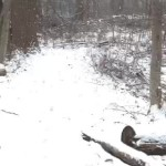 My Latest Event Periscope – Walk In The Woods In The Snow!