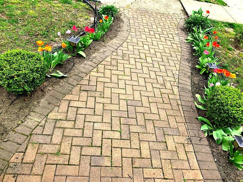 garden free of weeds