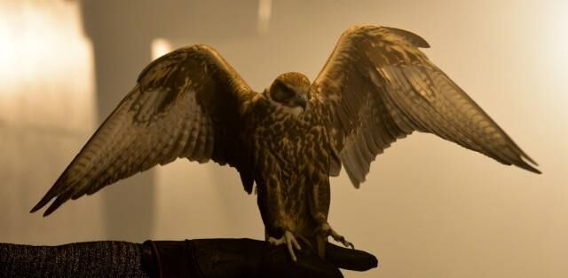 Falconry at Medieval times