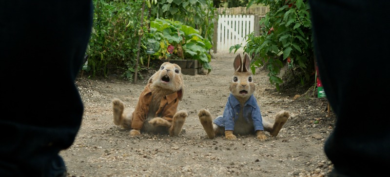 life's lessons in Peter Rabbit