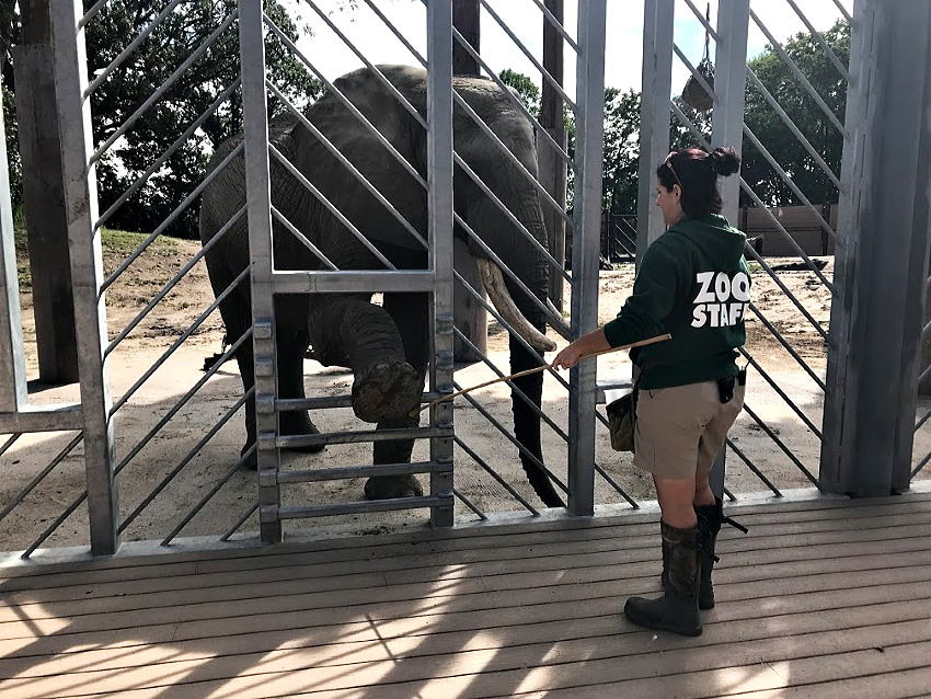 Elephants at The Omaha Zoo