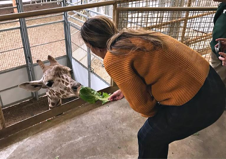 Feeding animals at the zoo