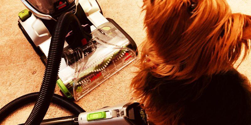 Dog-Hair-Cleaner
