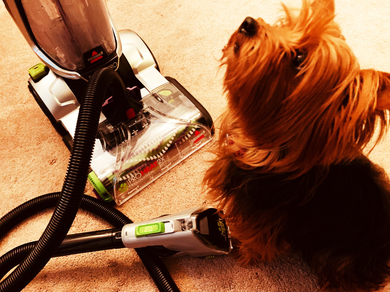 Dog-Hair-Cleaner