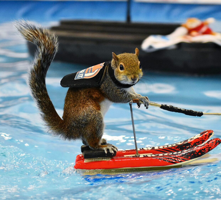 Surfing squirrel at the AC Boatshow