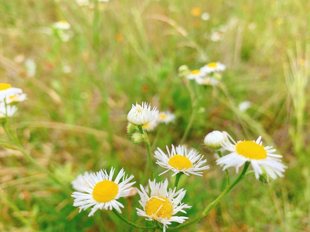 flowers along the KOA nature trail