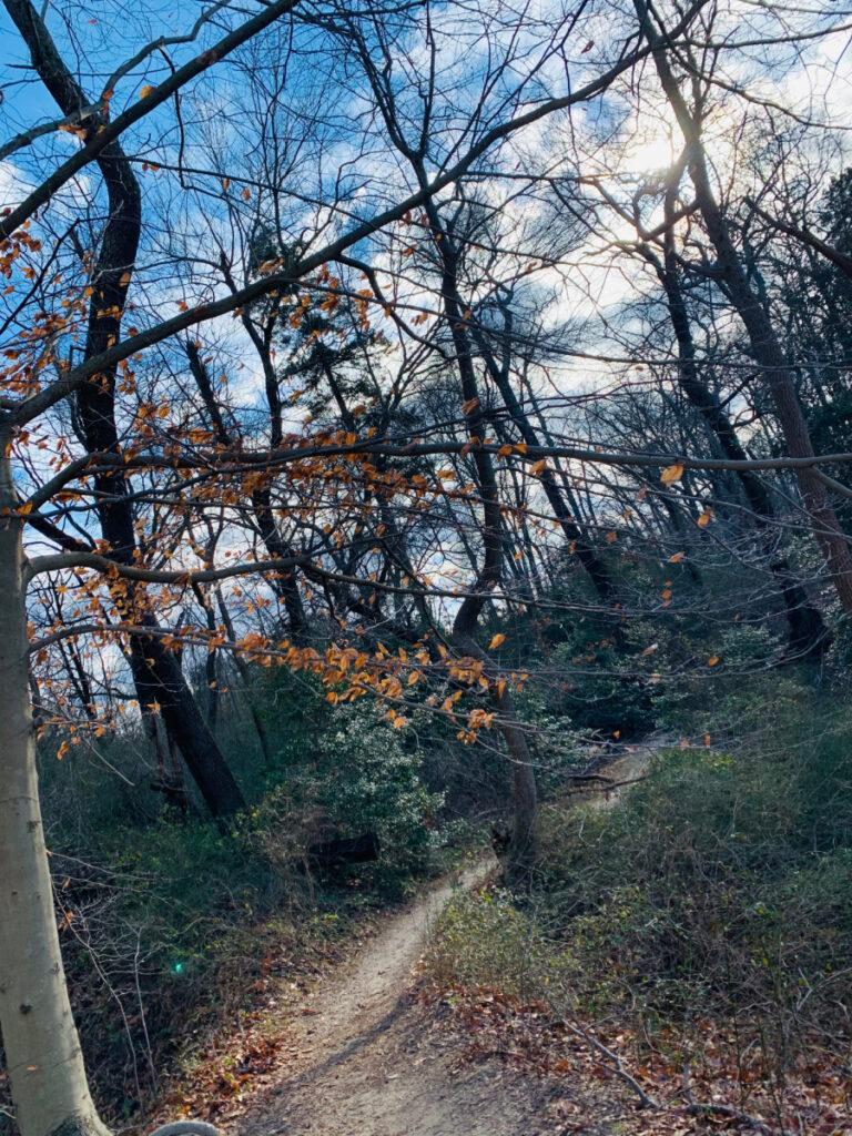 trail picture ceres park