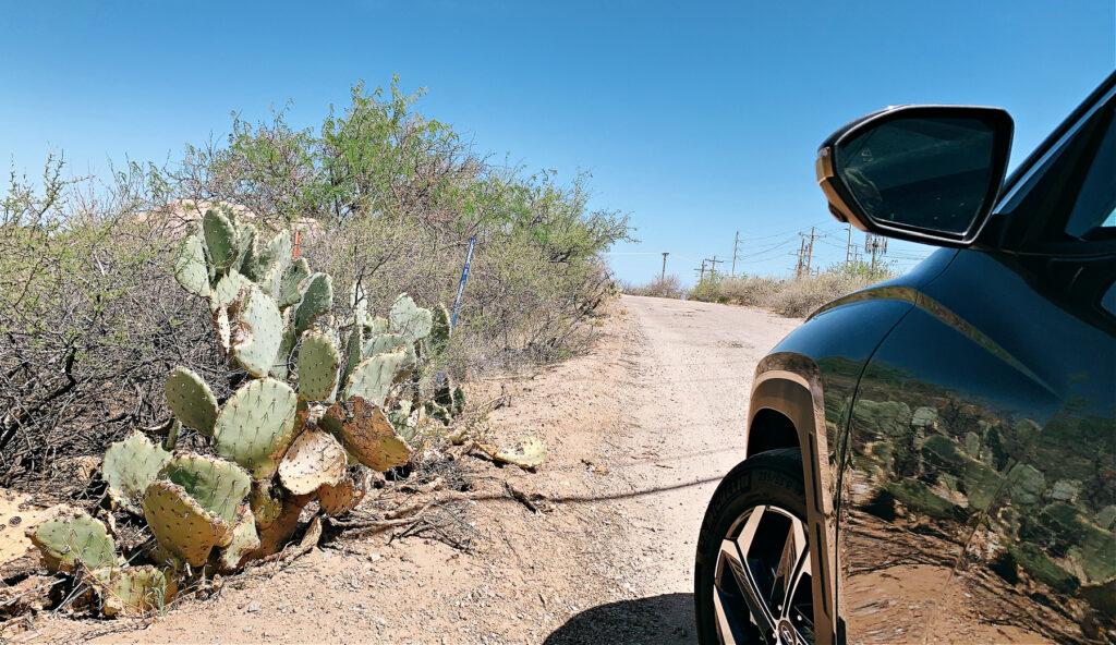 in the Tucson desert